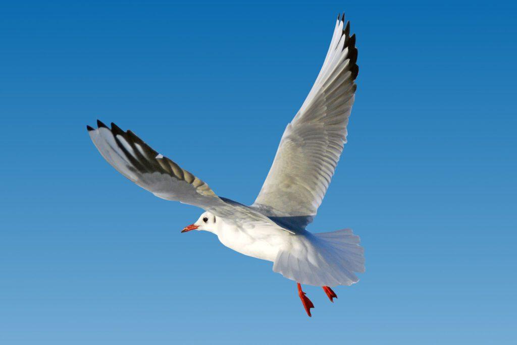 seagull-2915640
