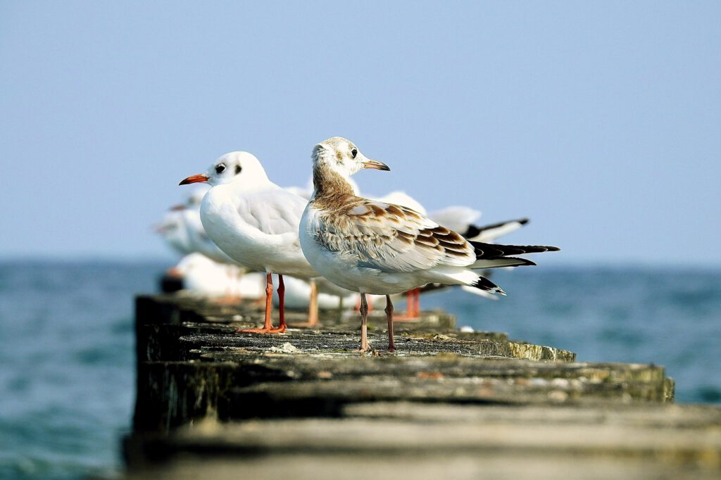 the-seagulls-3622088