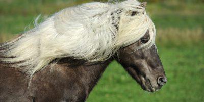 horse-1330704